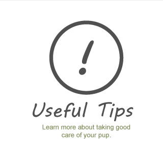 Useful Tips - learn more about taking good care of your pup